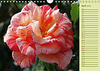 Beautiful Roses in the Garden (Wall Calendar 2019 DIN A4 Landscape) - Produktdetailbild 4