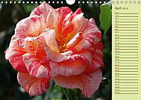 Beautiful Roses in the Garden (Wall Calendar 2019 DIN A4 Landscape) - Produktdetailbild 4