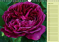Beautiful Roses in the Garden (Wall Calendar 2019 DIN A4 Landscape) - Produktdetailbild 7