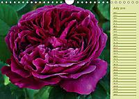Beautiful Roses in the Garden (Wall Calendar 2019 DIN A4 Landscape) - Produktdetailbild 7