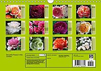 Beautiful Roses in the Garden (Wall Calendar 2019 DIN A4 Landscape) - Produktdetailbild 13
