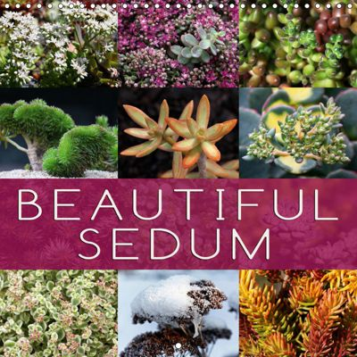 Beautiful Sedum (Wall Calendar 2019 300 × 300 mm Square), Martina Cross