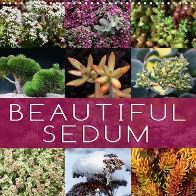 Beautiful Sedum (Wall Calendar 2019 300 × 300 mm Square), Martina Cross