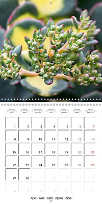 Beautiful Sedum (Wall Calendar 2019 300 × 300 mm Square) - Produktdetailbild 4