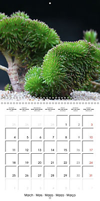 Beautiful Sedum (Wall Calendar 2019 300 × 300 mm Square) - Produktdetailbild 3