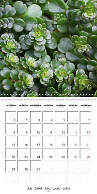 Beautiful Sedum (Wall Calendar 2019 300 × 300 mm Square) - Produktdetailbild 7