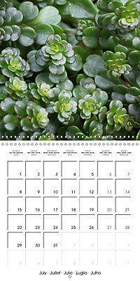 Beautiful Sedum (Wall Calendar 2019 300 × 300 mm Square) - Produktdetailbild 7