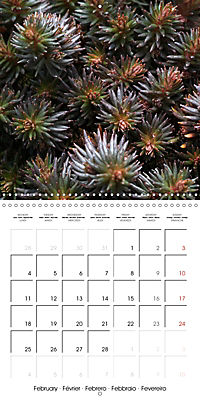 Beautiful Sedum (Wall Calendar 2019 300 × 300 mm Square) - Produktdetailbild 2
