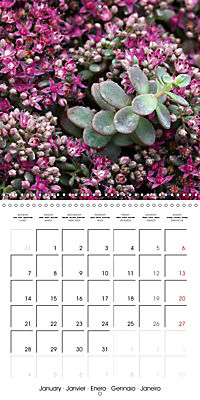 Beautiful Sedum (Wall Calendar 2019 300 × 300 mm Square) - Produktdetailbild 1