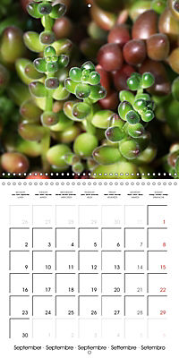 Beautiful Sedum (Wall Calendar 2019 300 × 300 mm Square) - Produktdetailbild 9