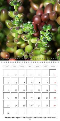 Beautiful Sedum (Wall Calendar 2019 300 × 300 mm Square) - Produktdetailbild 9