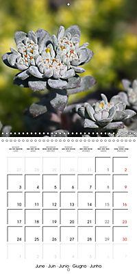 Beautiful Sedum (Wall Calendar 2019 300 × 300 mm Square) - Produktdetailbild 6