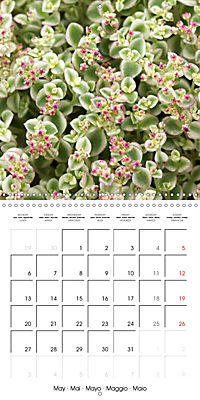 Beautiful Sedum (Wall Calendar 2019 300 × 300 mm Square) - Produktdetailbild 5