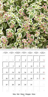Beautiful Sedum (Wall Calendar 2019 300 × 300 mm Square) - Produktdetailbild 5