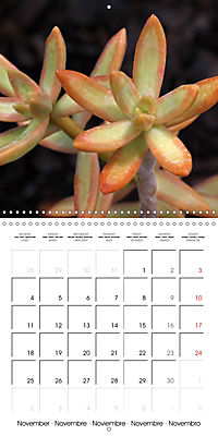 Beautiful Sedum (Wall Calendar 2019 300 × 300 mm Square) - Produktdetailbild 11