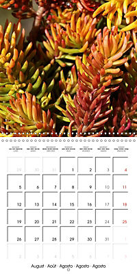 Beautiful Sedum (Wall Calendar 2019 300 × 300 mm Square) - Produktdetailbild 8