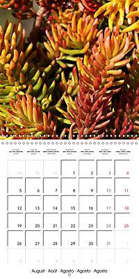 Beautiful Sedum (Wall Calendar 2019 300 × 300 mm Square) - Produktdetailbild 8
