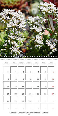 Beautiful Sedum (Wall Calendar 2019 300 × 300 mm Square) - Produktdetailbild 10