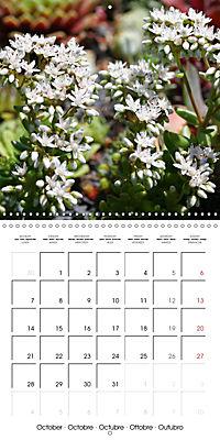 Beautiful Sedum (Wall Calendar 2019 300 × 300 mm Square) - Produktdetailbild 10