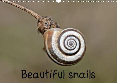 Beautiful snails (Wall Calendar 2019 DIN A3 Landscape), Christine Schmutzler-Schaub