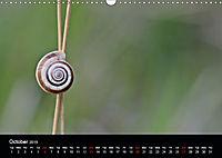 Beautiful snails (Wall Calendar 2019 DIN A3 Landscape) - Produktdetailbild 10