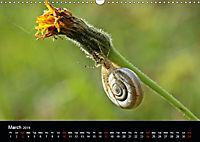 Beautiful snails (Wall Calendar 2019 DIN A3 Landscape) - Produktdetailbild 3