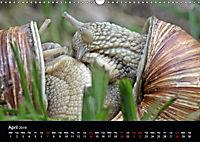Beautiful snails (Wall Calendar 2019 DIN A3 Landscape) - Produktdetailbild 4