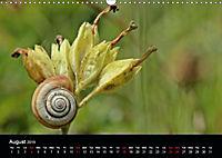 Beautiful snails (Wall Calendar 2019 DIN A3 Landscape) - Produktdetailbild 8