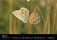 Beautiful snails (Wall Calendar 2019 DIN A3 Landscape) - Produktdetailbild 5