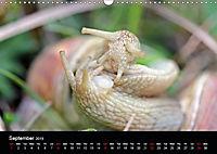 Beautiful snails (Wall Calendar 2019 DIN A3 Landscape) - Produktdetailbild 9