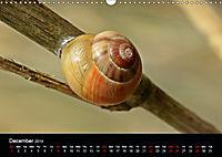 Beautiful snails (Wall Calendar 2019 DIN A3 Landscape) - Produktdetailbild 12