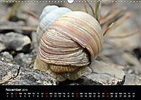 Beautiful snails (Wall Calendar 2019 DIN A3 Landscape) - Produktdetailbild 11