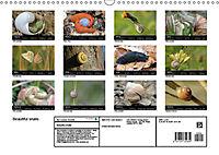 Beautiful snails (Wall Calendar 2019 DIN A3 Landscape) - Produktdetailbild 13
