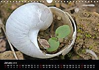 Beautiful snails (Wall Calendar 2019 DIN A4 Landscape) - Produktdetailbild 1