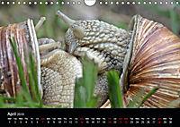Beautiful snails (Wall Calendar 2019 DIN A4 Landscape) - Produktdetailbild 4