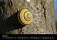 Beautiful snails (Wall Calendar 2019 DIN A4 Landscape) - Produktdetailbild 6