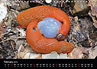 Beautiful snails (Wall Calendar 2019 DIN A4 Landscape) - Produktdetailbild 2