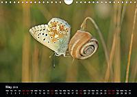 Beautiful snails (Wall Calendar 2019 DIN A4 Landscape) - Produktdetailbild 5