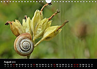 Beautiful snails (Wall Calendar 2019 DIN A4 Landscape) - Produktdetailbild 8