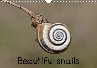 Beautiful snails (Wall Calendar 2019 DIN A4 Landscape), Christine Schmutzler-Schaub