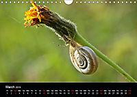 Beautiful snails (Wall Calendar 2019 DIN A4 Landscape) - Produktdetailbild 3