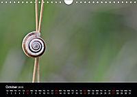 Beautiful snails (Wall Calendar 2019 DIN A4 Landscape) - Produktdetailbild 10