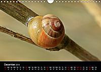 Beautiful snails (Wall Calendar 2019 DIN A4 Landscape) - Produktdetailbild 12