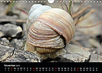 Beautiful snails (Wall Calendar 2019 DIN A4 Landscape) - Produktdetailbild 11