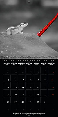 Beauty in Red (Wall Calendar 2019 300 × 300 mm Square) - Produktdetailbild 8