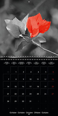 Beauty in Red (Wall Calendar 2019 300 × 300 mm Square) - Produktdetailbild 10