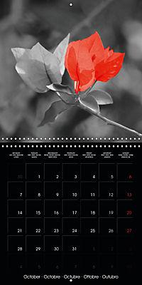 Beauty in Red (Wall Calendar 2019 300 × 300 mm Square) - Produktdetailbild 10