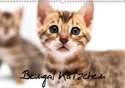 Bengal Kätzchen (Wandkalender 2018 DIN A3 quer), Sylke Enderlein - Bethari Bengals