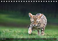 Bengalen Outdoor und Action (Tischkalender 2019 DIN A5 quer) - Produktdetailbild 3