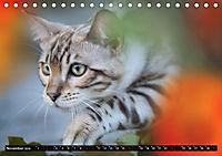 Bengalen Outdoor und Action (Tischkalender 2019 DIN A5 quer) - Produktdetailbild 11
